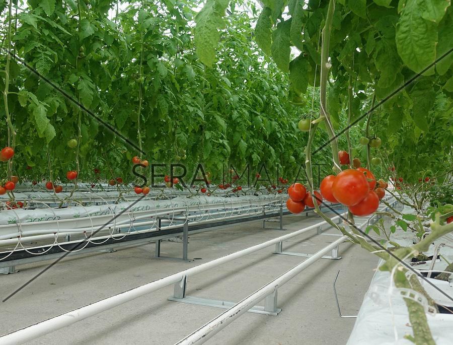 domates serası kurulumu