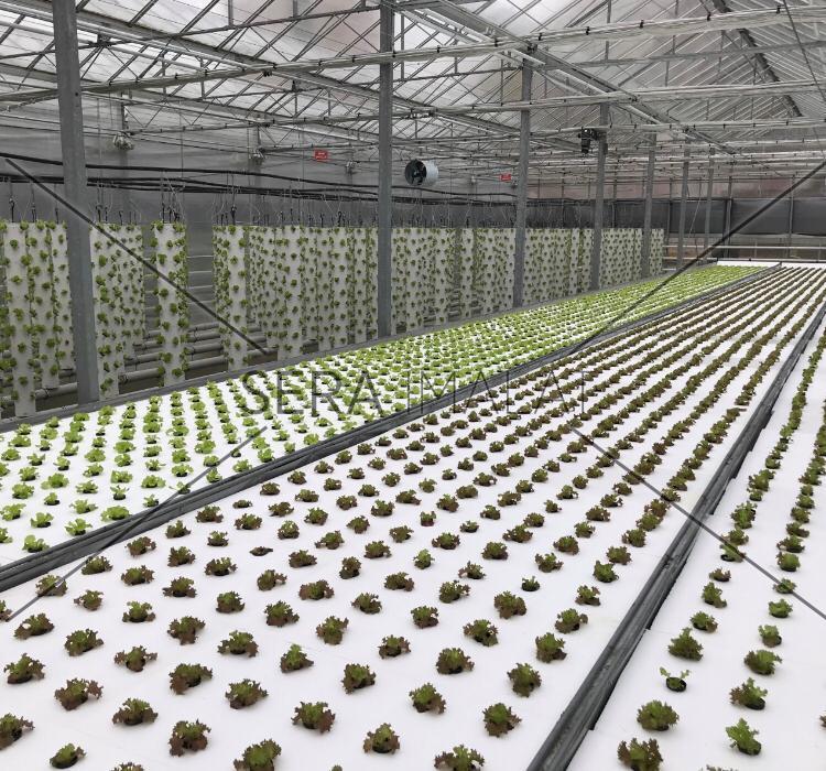 topraksız tarım serası yeni