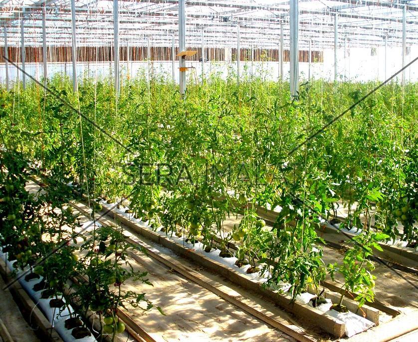 topraksız tarım serası